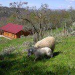 Agroturystyka CISOGNA w Anagni