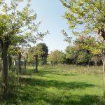 Ośrodek kolonijny w Rimini - park prywatny