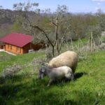 Agroturystyka CISOGNA w Anagni 1